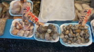 Fresh seafood, clams and snails, sold at Tsukiji Market