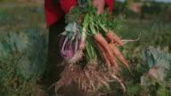 Frisches Gemüse in Frau Hände