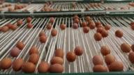 Freshly laid eggs pass along a conveyor inside an egg farm in the West Flanders region of Belgium on Thursday Aug 10 2017