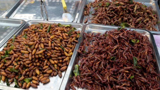 Fried insects in a food stall at night market