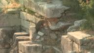 Friendly Cats, Ephesus, Turkey