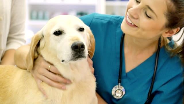 Freundliche weibliche Tierarzt spricht entzückenden Hund Haustiere vor Beginn gut Prüfung