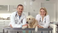 Friendly Veterinarians In The Animal Hospital