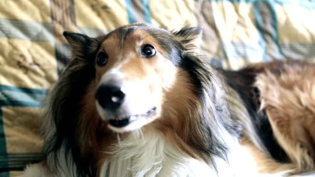 Paura di cane