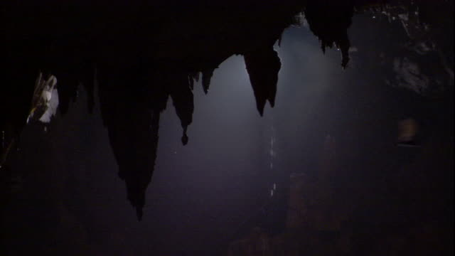 Fringe-lipped bats fly past dripping stalactites in Deer Cave. Available in HD.