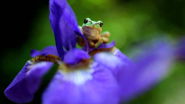 Frog on the flower