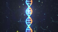 DNA from a Particle Vortex