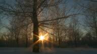 Frost falls off tree