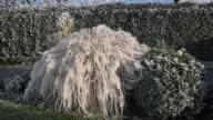 ZO / Frost on grass in garden