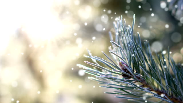 Frozen Harmonie-Endlos wiederholbar