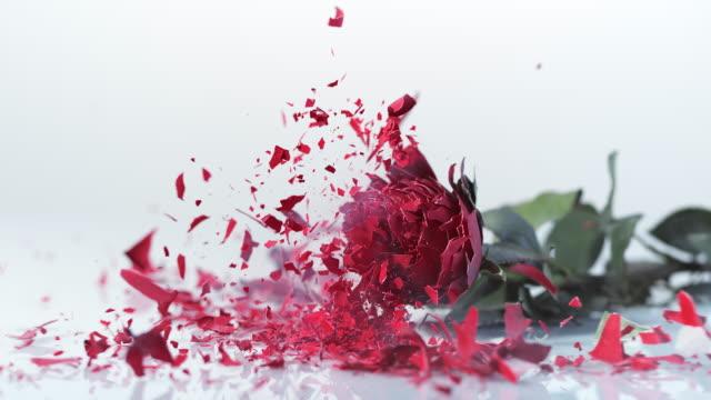 SLO MO LD bevroren rode roos vallen en breken in kleine stukjes