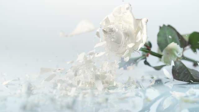 SLO MO Frozen white rose breaking into pieces