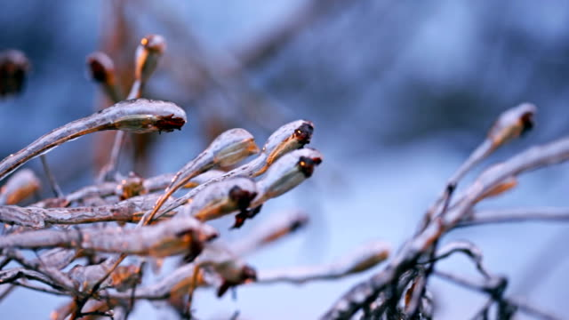 Frozen winter beauty