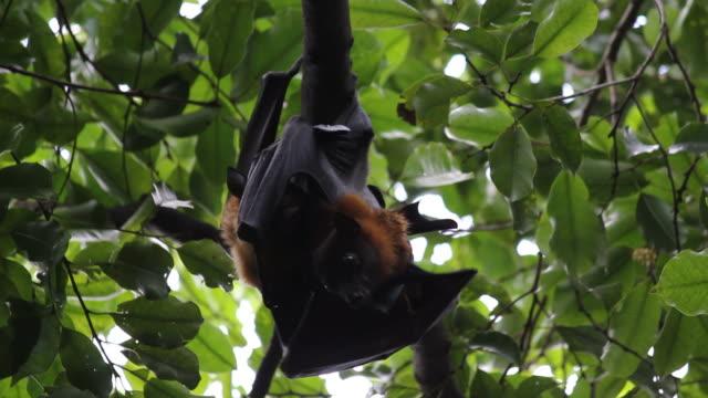 Obst Bats sind Stillen