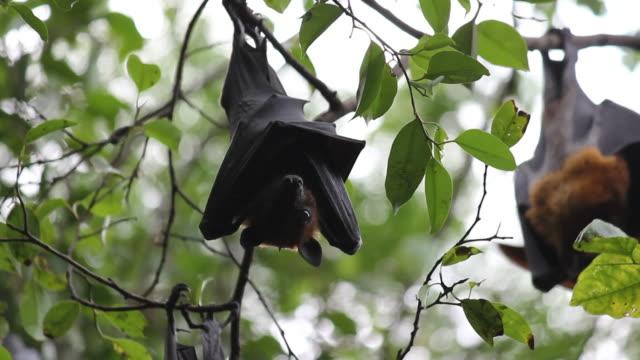 Obst Bats hängen Upside Down - 3