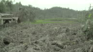 Fruit crop devastated by heavy Ashfall from the eruption of Merapi volcano; Indonesia. 7 November 2010 / AUDIO