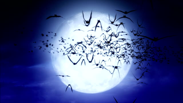 Full Moon Bats