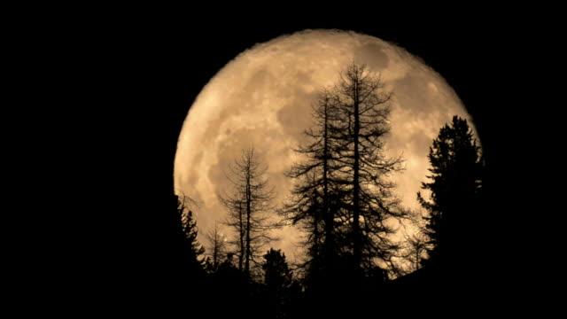 full moon rising behind trees
