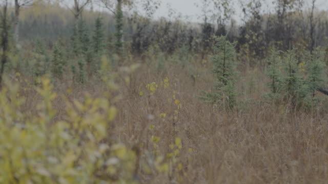 Full shot of small trees at Lake Hood