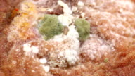 Fungi growing in peach skin