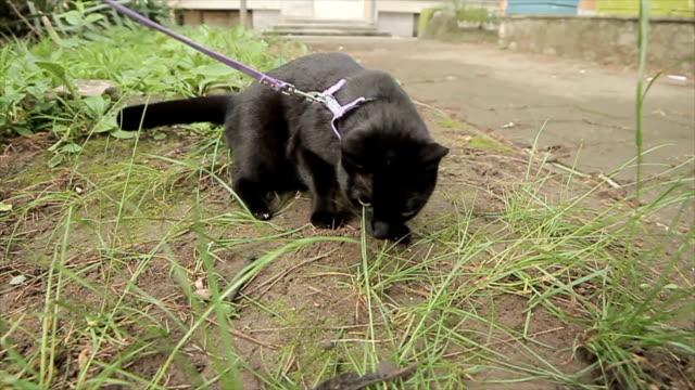 Funny cat is afraid of leaf