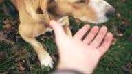 Lustige Hund spielen, persönliche Perspektive
