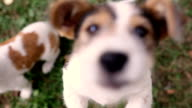 Funny dogs run