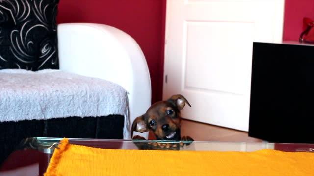Grappige puppy hondje bereikt Hondevoer op de tafel en eten