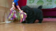 Roliga valp leker med en leksak