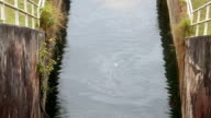 Galway canal small dam.