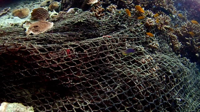 Garbage on colorful coral
