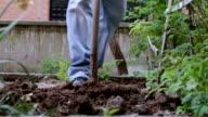 garden digging