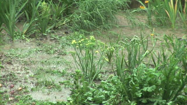 HD: Garden in the rain