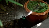 Garden irrigation system watering tree (Slow motion shot)