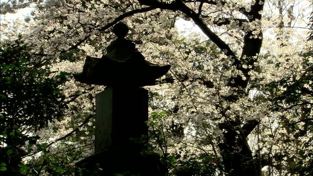 MS Garden lantern and cherry blossoms, Kichijo-ji, Tokyo, Japan