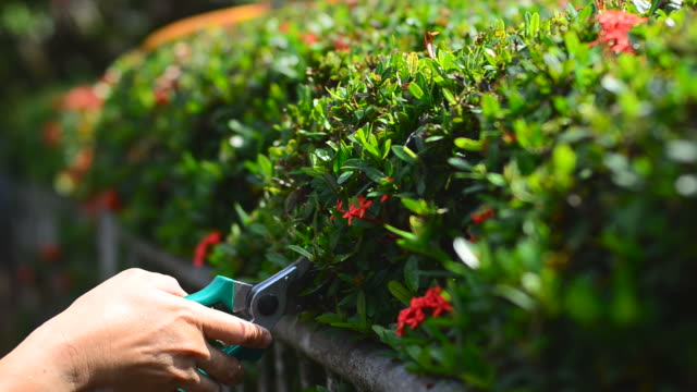 Garden working