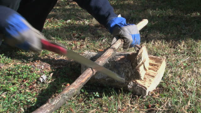 Gardener sawing and breaking some branches for the fireplace