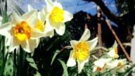 HD: Gärtnern-Eingießen von Wasser auf Blumen