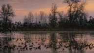 WS PAN SLO MO Geese taking off from wetlands / Finley National Wildlife Refuge, Oregon, USA