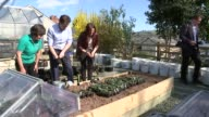 Liberal Democrats Nick Clegg at mental heath charity in Powys WALES Powys Newtown EXT Close Shot of plants in trays / hillside / Nick Clegg walking...