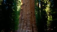General Sherman Giant Sequoia Tree