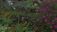 General views allotment Cabbages growing on allotment plot / GVs flowers and vegetables / Close shot flowers / Greenhouse on plot