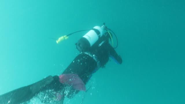 General Views of scuba diving in Coromandel Peninsula New Zealand