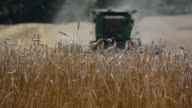 Generic wheat farming