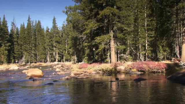 A gentle river flows through Tioga Pass.