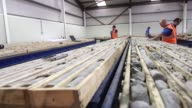 Geologists check drill core samples removed from the Curraghinalt gold project operated by Dalradian Resources Inc near Omagh Northern Ireland on...