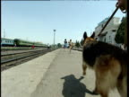 German Shepherd drugs sniffer dog and policeman on patrol Uzbekistan