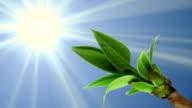 Germinating bud, spring, sunny day