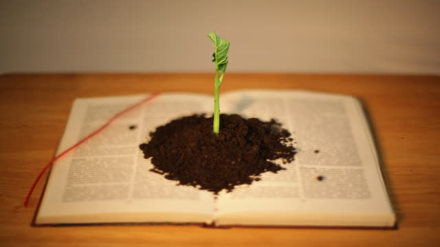 Germinating plant on book