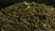 Germinating Plants